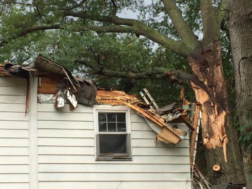 college park tree damage